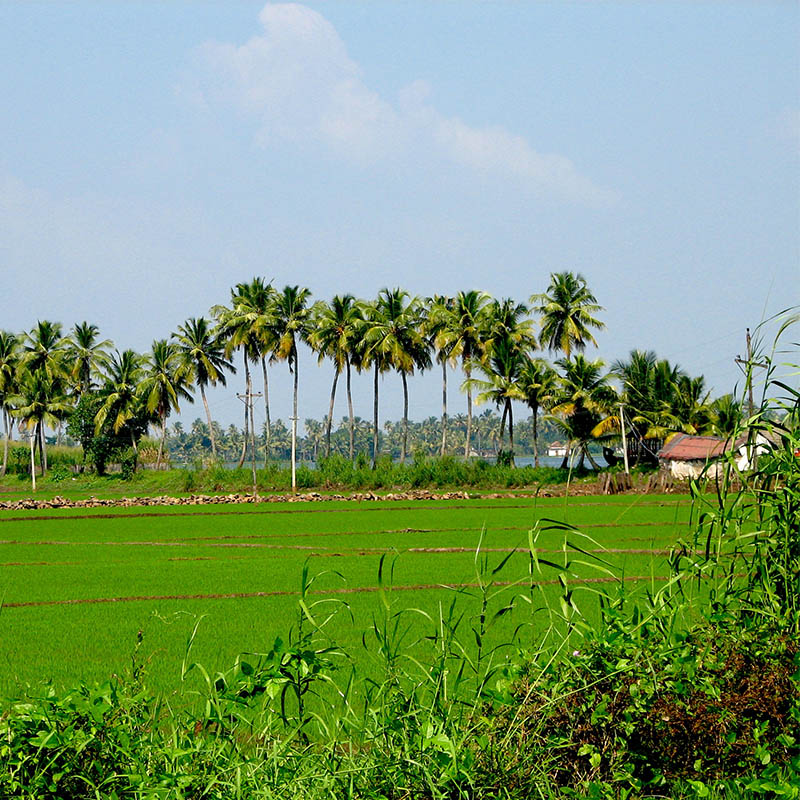 mangarai village