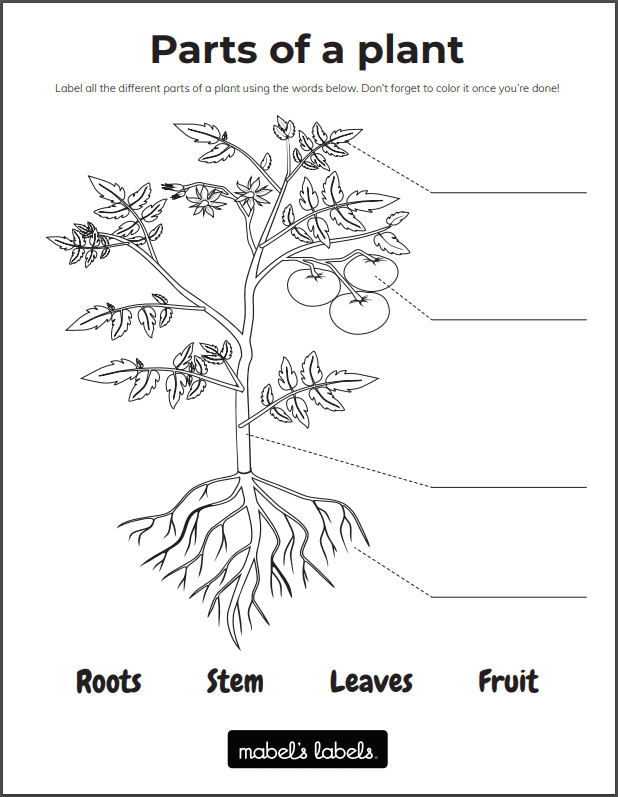 Parts of a Plant Printable from Mabel's Labels