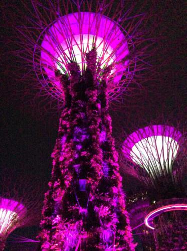 シンガポール 夜のガーデンズ・バイ・ザ・ベイ
