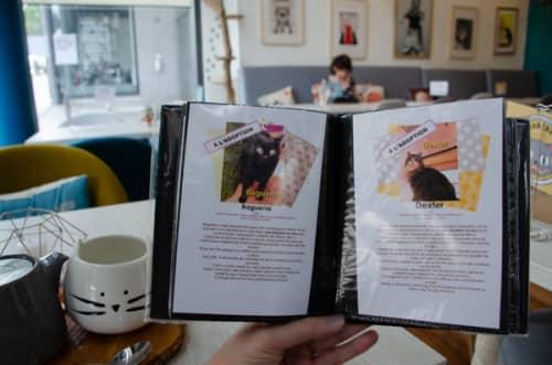 パリの猫カフェ・ムスタッシュカフェ 保護猫の養子縁組リスト