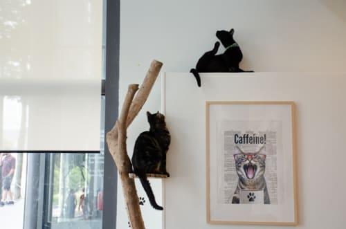 パリの猫カフェ・ムスタッシュカフェで猫に癒される