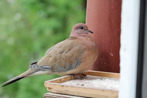 ウズベキスタンの鳥