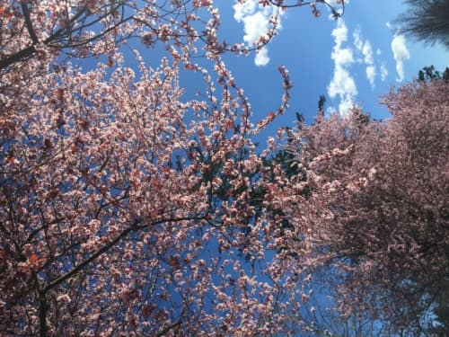 ポートランドの春