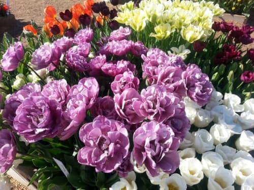 ポートランドの花