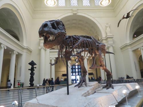 シカゴ フィールド博物館 Sue