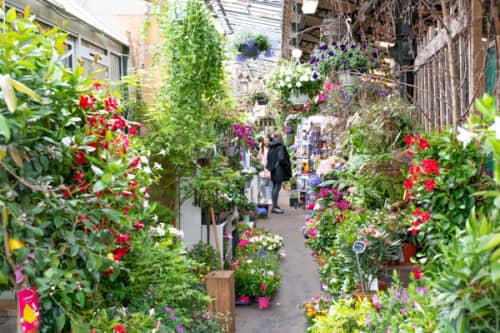 パリ シテ島観光 花と小鳥の市場