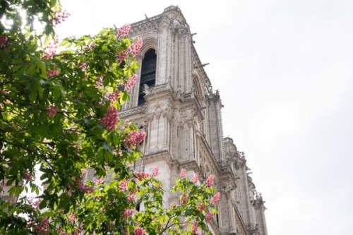 パリ シテ島 ノートルダム大聖堂
