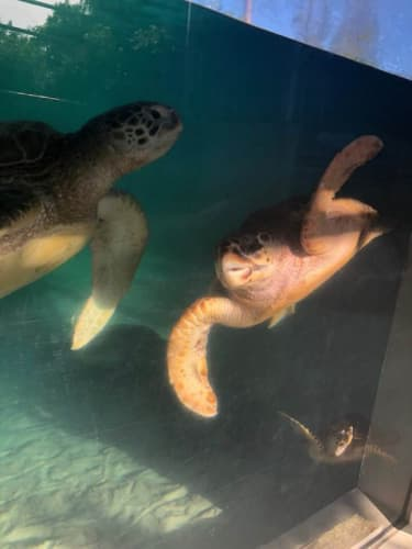 ニューカレドニアの水族館