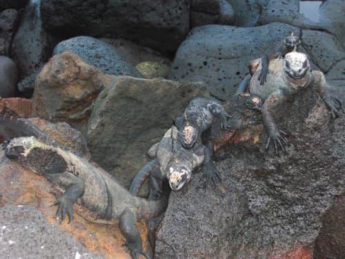 世界の絶景 ガラパゴス諸島の生き物達