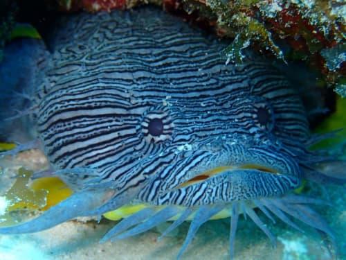 メキシコ カンクンの海で見た生物
