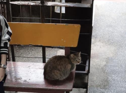 猴硐猫村の猫