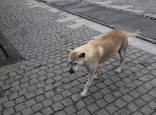 猴硐猫村の犬