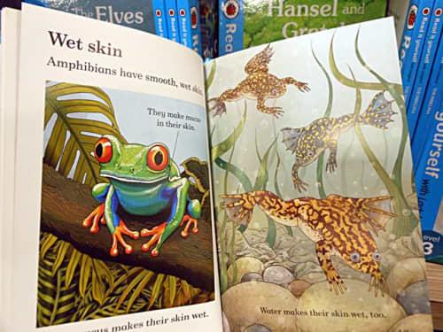 """英語の絵本「Ladybird」""""Reptile and amphibians"""""""
