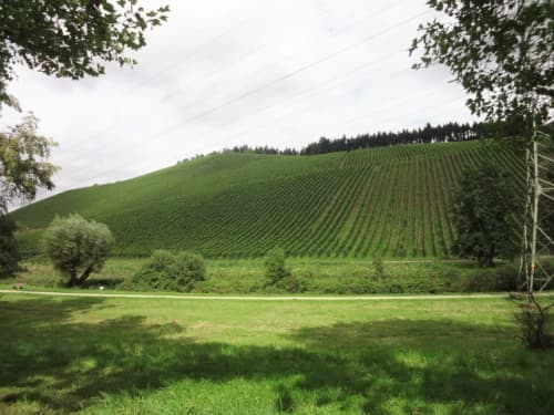 トリーアのワイン畑