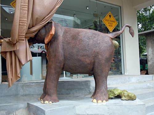 ゾウのフン繊維の紙商品を製造・販売しているお店(ピンナワラ)