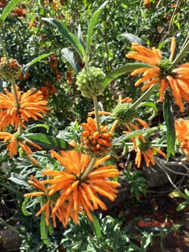 ケープタウン 花
