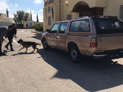 ヨルダンの爆発物探知犬