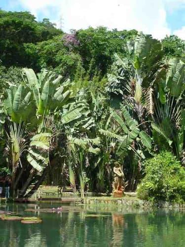 オオオニバスのある池