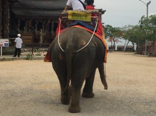タイでは象にのれるぞう!