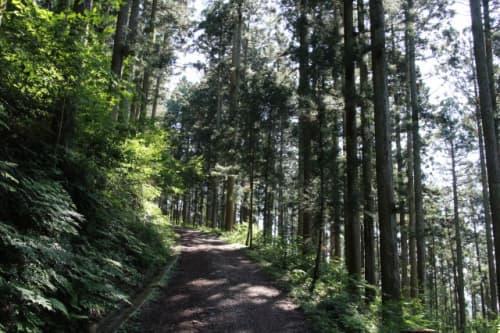 横峰寺 星ヶ森への道