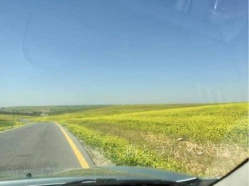 3月中旬のマダバ近郊の花畑。