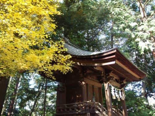 浅間神社 イチョウ