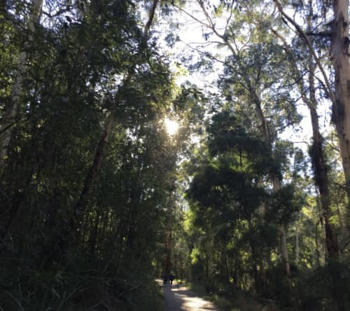 メルボルンの森