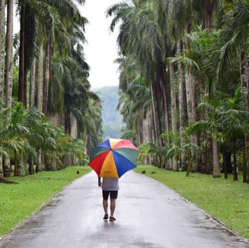 雨の植物園