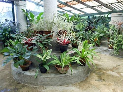 ペーラーデニヤ植物園の植物(キャンディ)