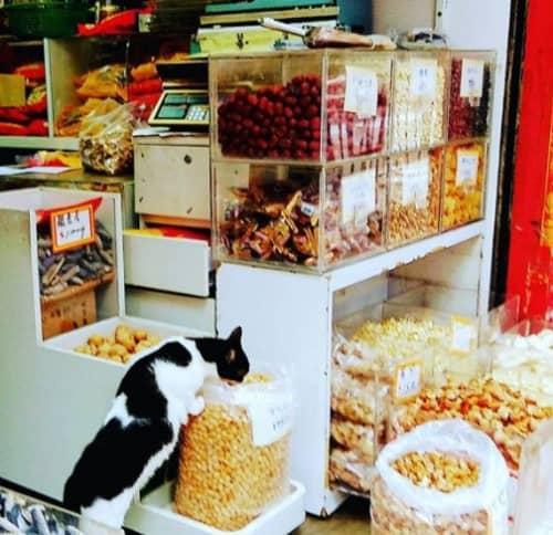 マカオの乾物街にいるネコ