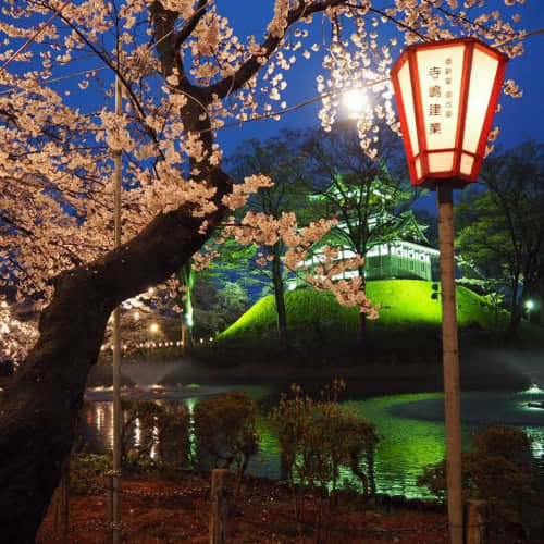 上越高田の夜桜