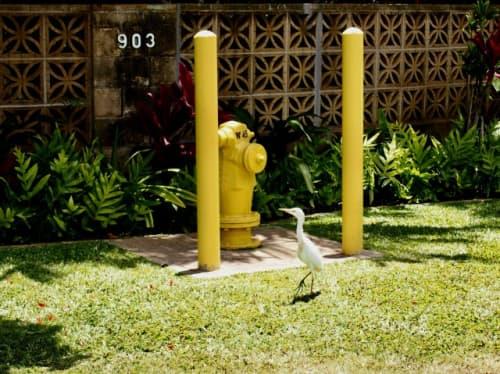 ハワイの街中で出会った鳥