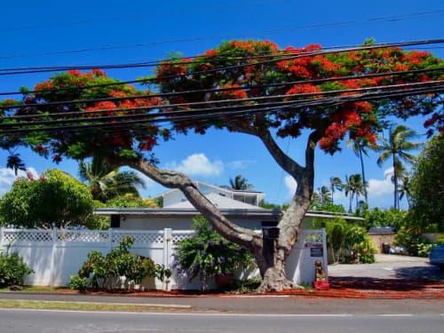 青い空と赤い花と緑の木々
