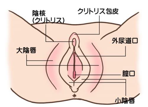 女性の股間 画像