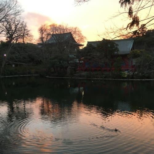 井の頭弁財天の夕景