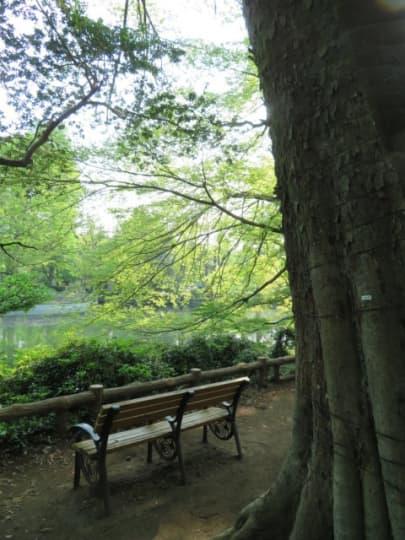 新緑の井の頭公園