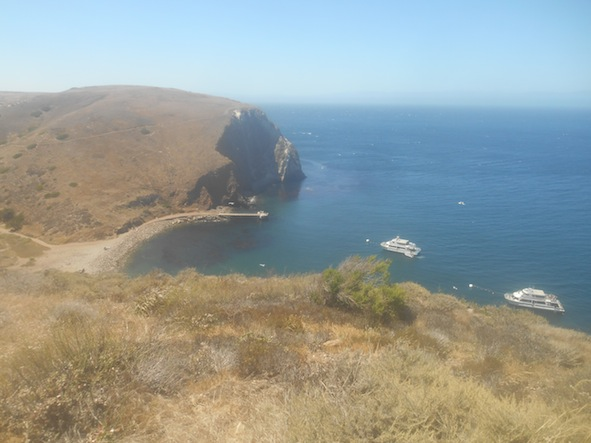 サンタクルス島のスコーピオン