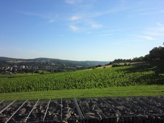 ドイツのブドウ畑