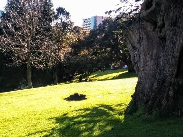 【ニュージーランドの文化と習慣】注意点9:自由と平等【公園に謎の物体1】