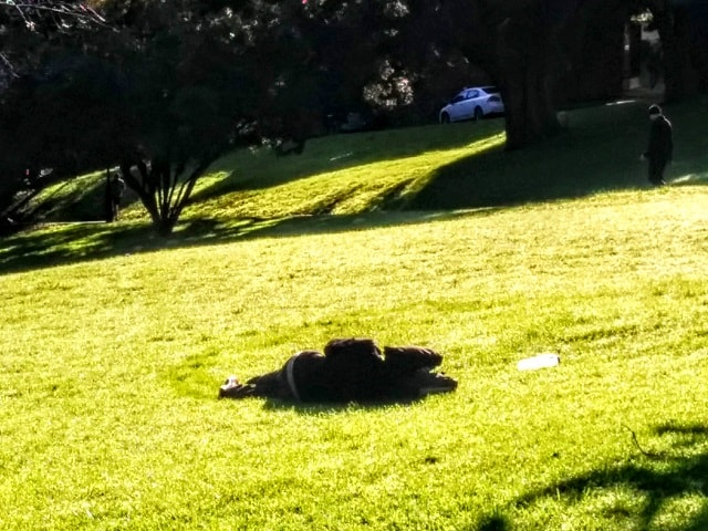 【ニュージーランドの文化と習慣】注意点9:自由と平等【公園に謎の物体2】