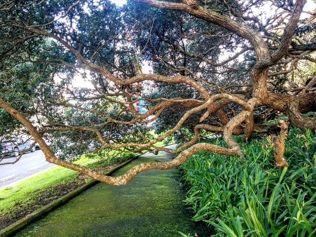 【ニュージーランドの文化と習慣】注意点10:おおらかな心持ち【市指定公園でも野放しの木々たち】