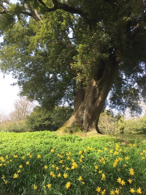 アランデル城の庭