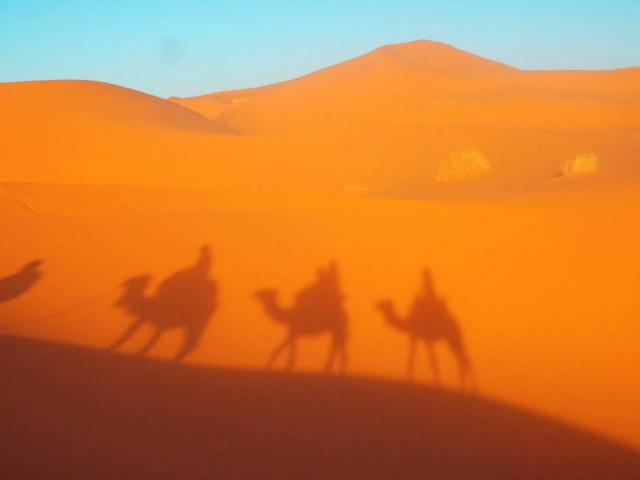 サハラ砂漠 ラクダの影