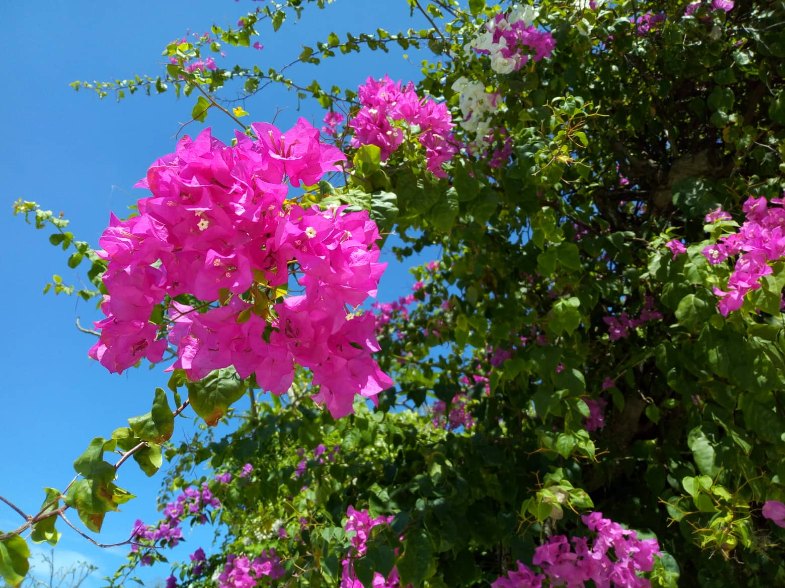 バリ島南国の花
