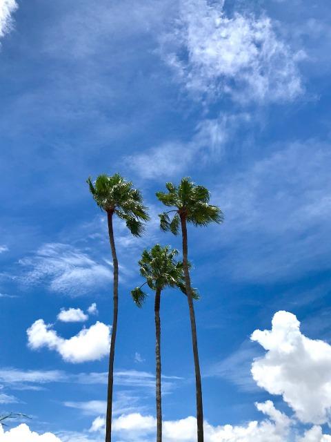 オーランドの空とパームツリー