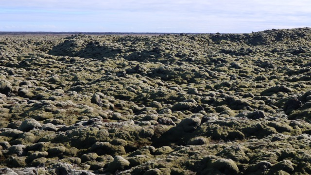 アイスランドの苔