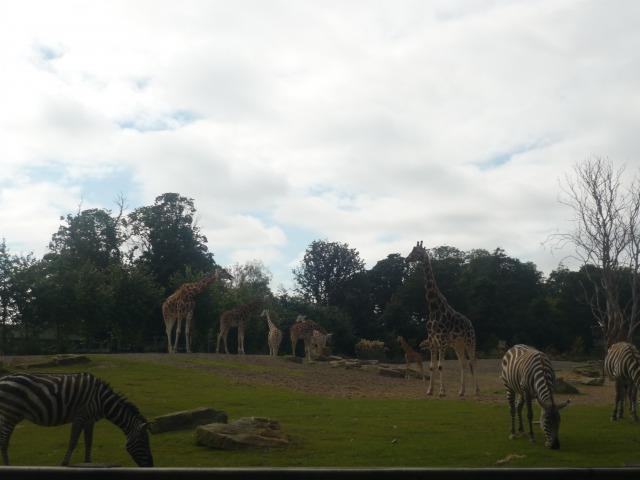 ダブリン動物園