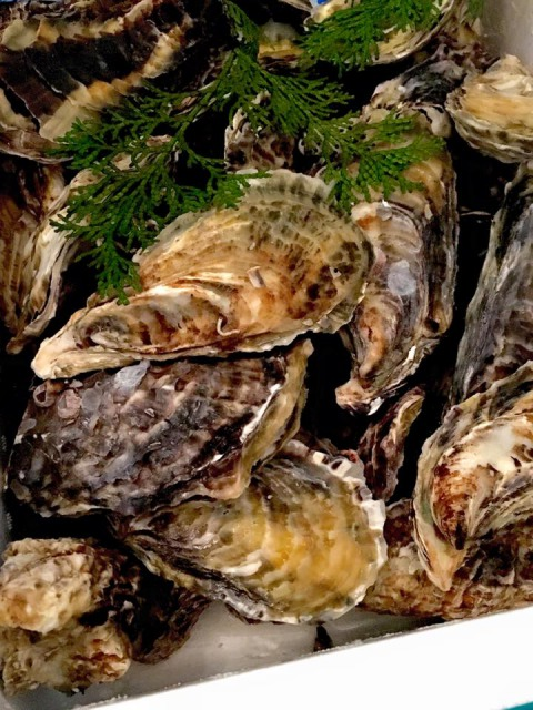 殻付き的矢牡蠣