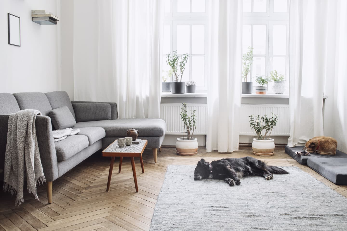 Neutral schemed living room with plant features and two dogs