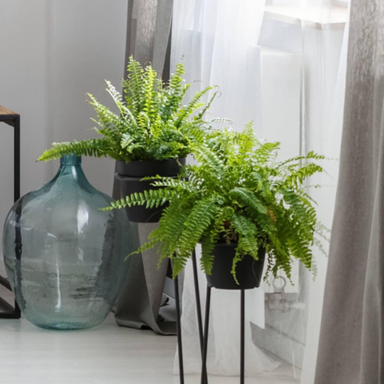 Green fern plans in a neutral schemed room